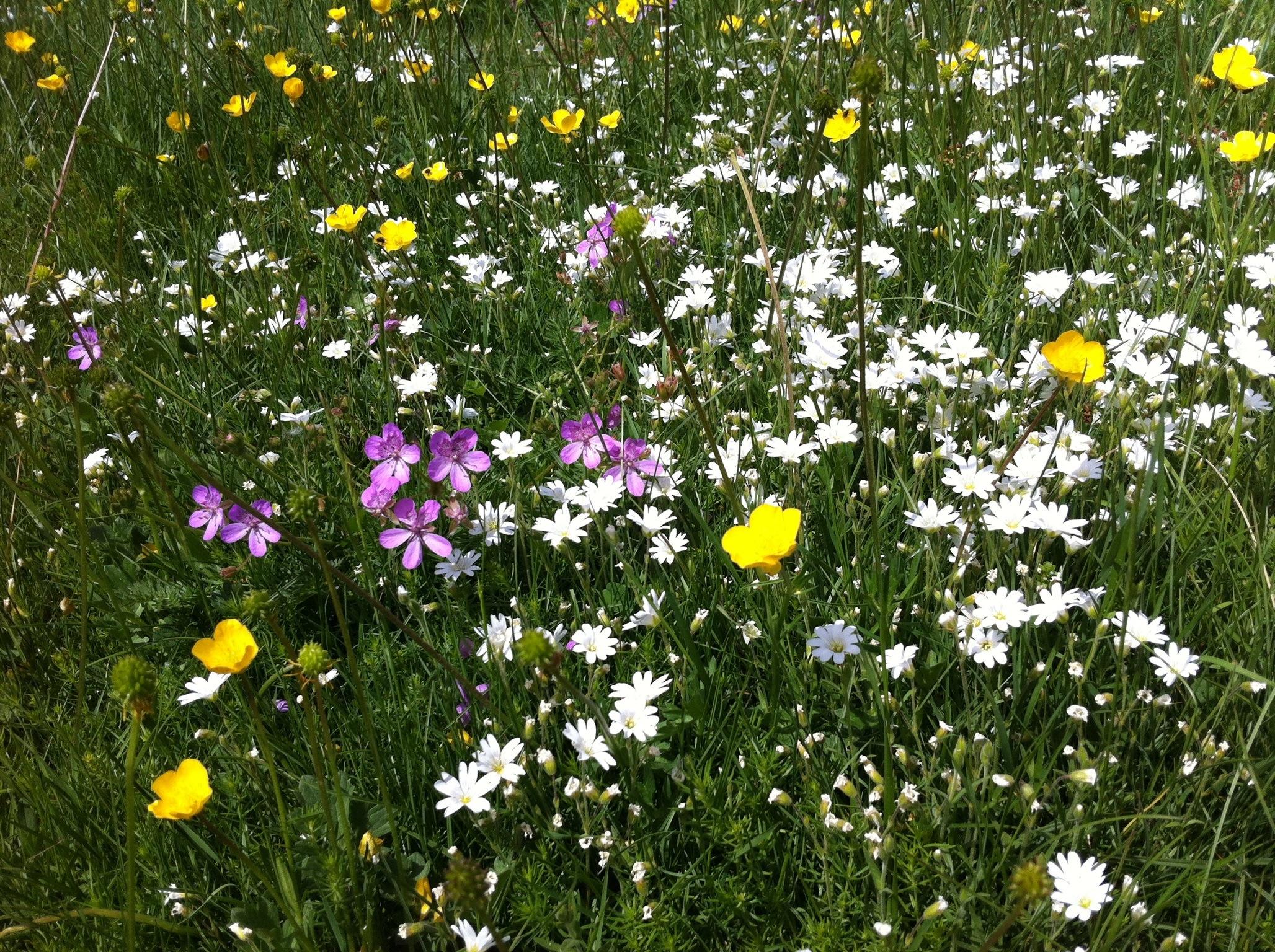 Margaritas De Colores En La Hierba 30995: Meditar Con Flores