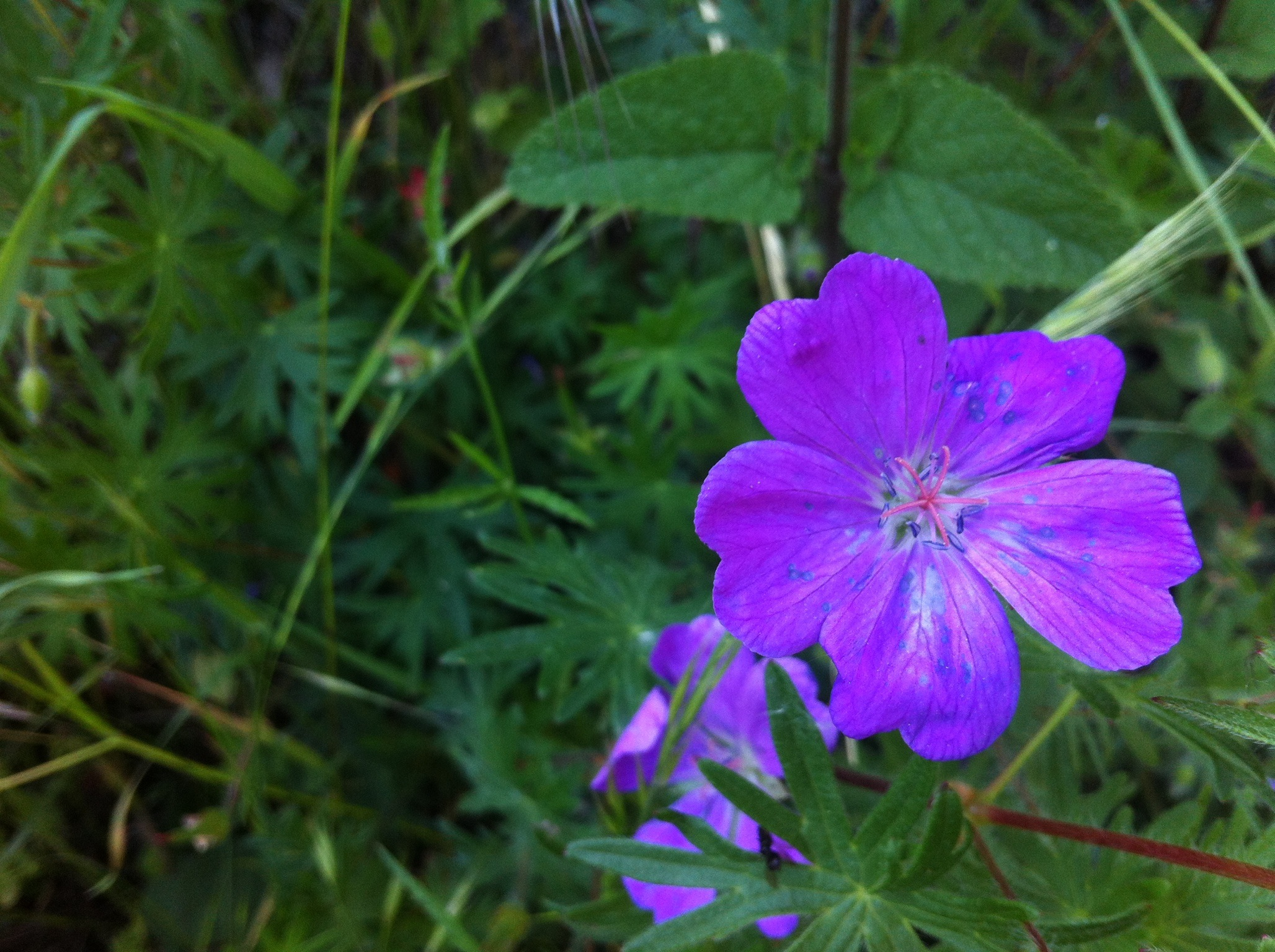meditar con flores | terapia natural | Página 5
